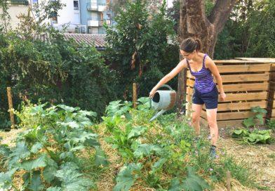Au jardin communautaire L'Arrosoir au Neudorf, ça pousse, ça pousse…