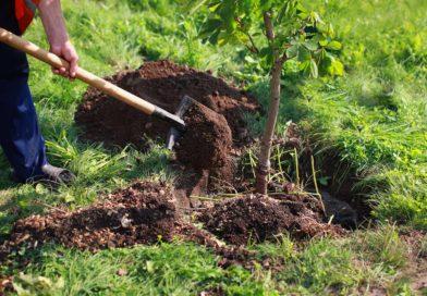 A Bruxelles: un arbre sera planté pour chaque naissance dès 2020